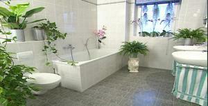 Květiny do koupelny